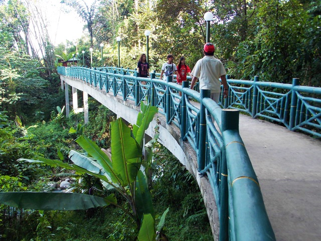 Take a relaxing walk at Poring Canopy Walk
